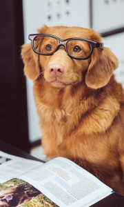 Pet-Friendly Offices are a key benefit today